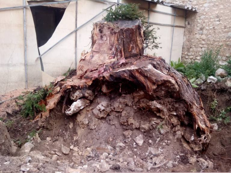 L 39 lagage sarl jeanneau paysagiste poitiers 86 for Entretien jardin chatellerault