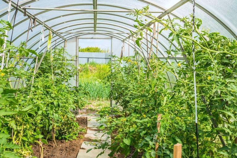 Serres de jardin fourniture et accessoire serre de - Accessoires serre de jardin ...