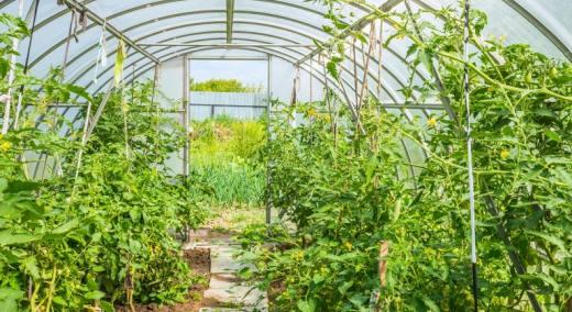 Serre de jardin chatellerault